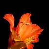 flowers :