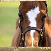 Horses :